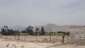 A view of the Tacna desert, with a barbed-wire fence, cactus, and a brick wall. In the distance there are dunes.
