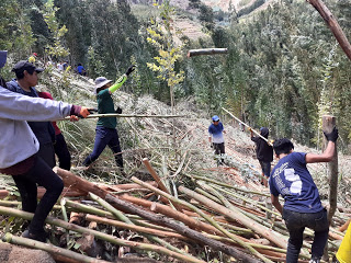 Students and asesores throw giant logs down the hillside.