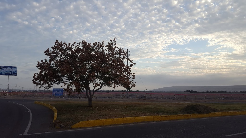 A photo taken at the corner of the turnabout where volunteers catch the local bus. A tree stands alone amidst a patch of grass.